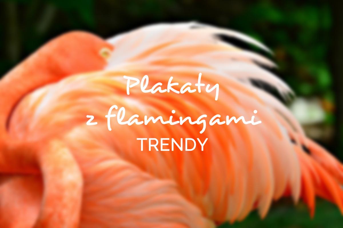 plakaty z flamingami