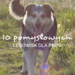 10 pomysłowych legowisk dla psów