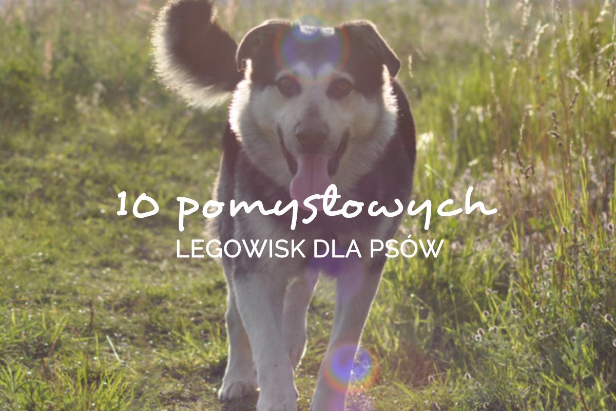 10 pomyslowych legowisk dla psow